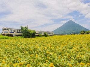 指宿、霧島、北薩など鹿児島はカメラ撮影する場所がたくさんあります